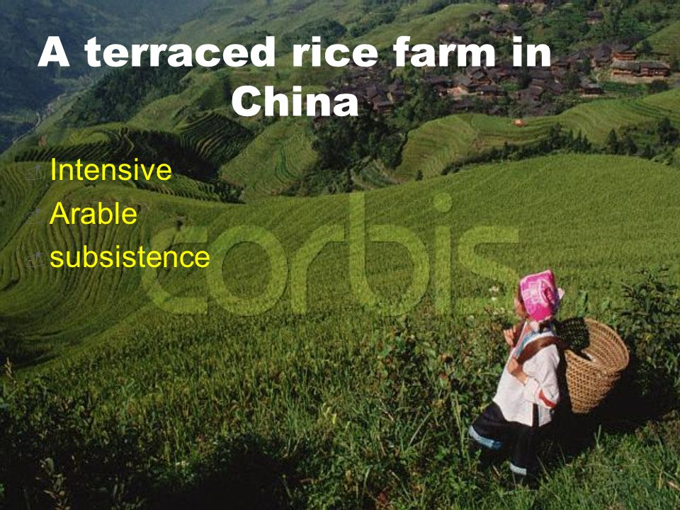 A terraced rice farm in China  Intensive  Arable  subsistence