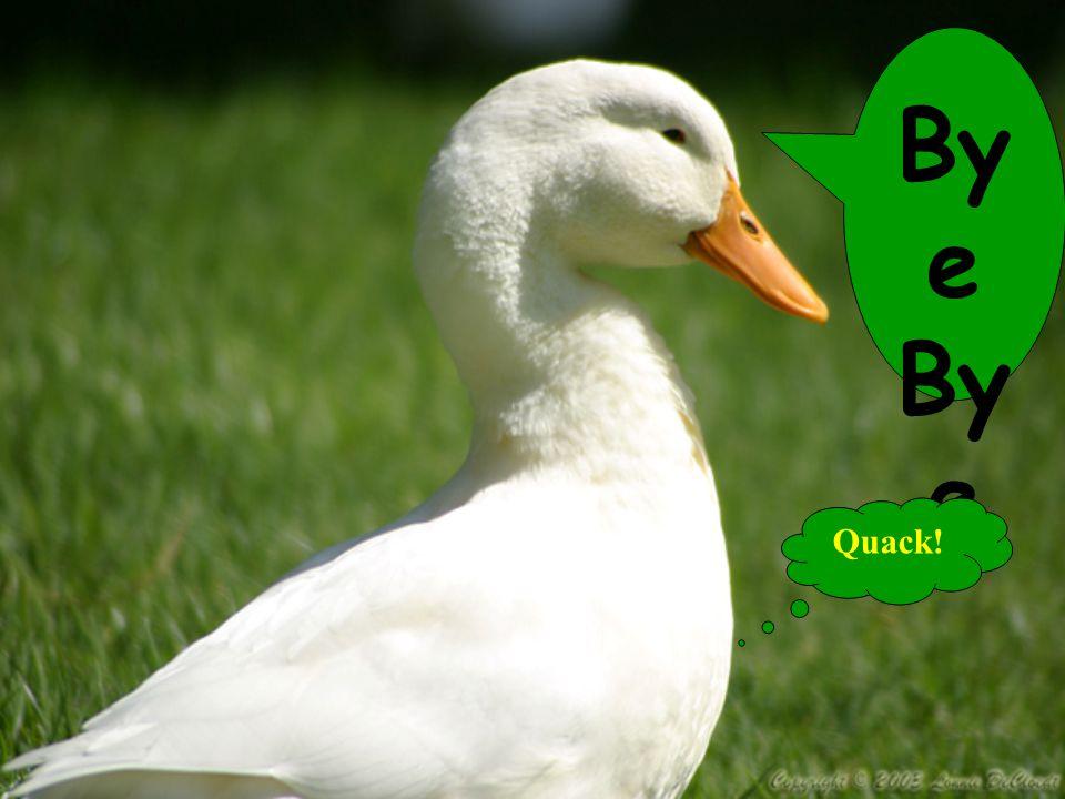By e Quack!