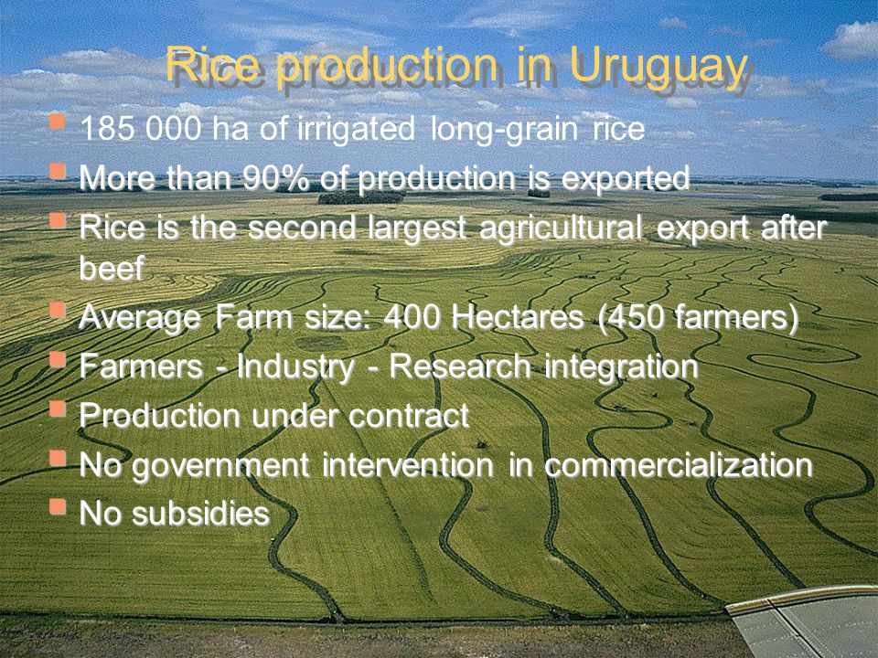  185 000 ha of irrigated long-grain rice  More than 90% of production is exported  Rice is the second largest agricultural export after beef  Average Farm size: 400 Hectares (450 farmers)  Farmers - Industry - Research integration  Production under contract  No government intervention in commercialization  No subsidies Rice production in Uruguay