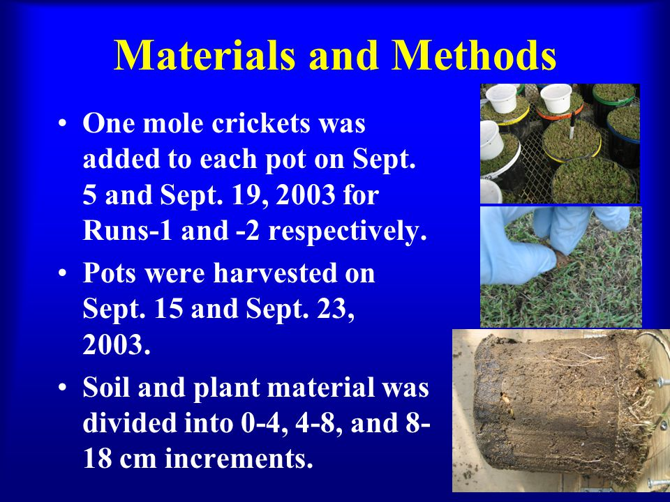 Materials and Methods One mole crickets was added to each pot on Sept. 5 and Sept. 19, 2003 for Runs-1 and -2 respectively. Pots were harvested on Sep
