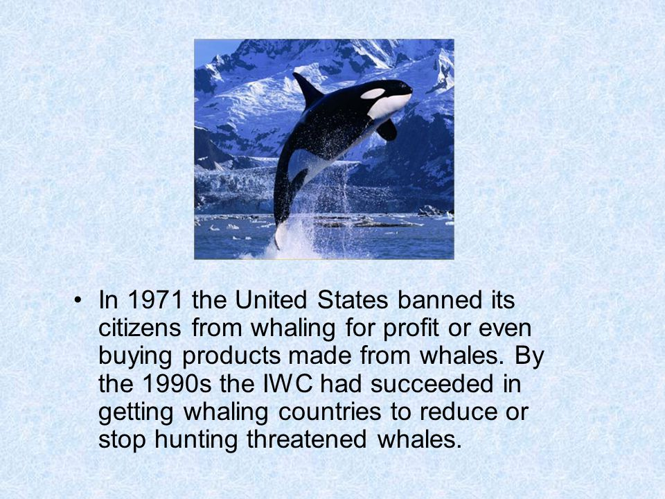 In 1971 the United States banned its citizens from whaling for profit or even buying products made from whales. By the 1990s the IWC had succeeded in
