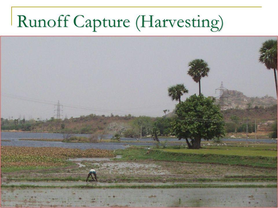 Runoff Capture (Harvesting)
