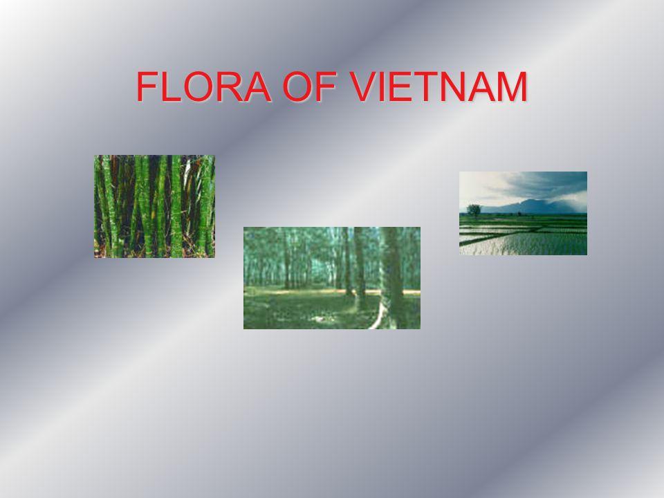 FLORA OF VIETNAM