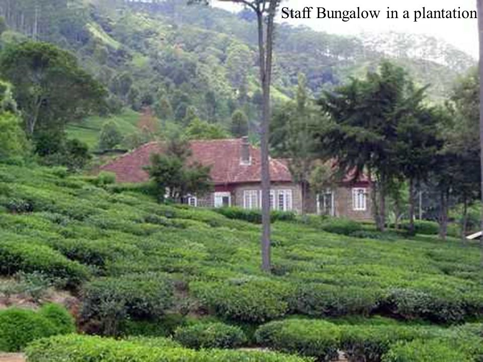 Staff Bungalow in a plantation