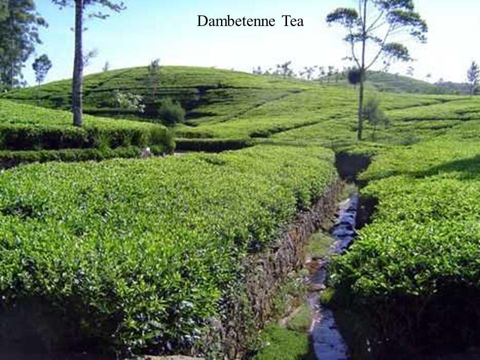 Dambetenne Tea