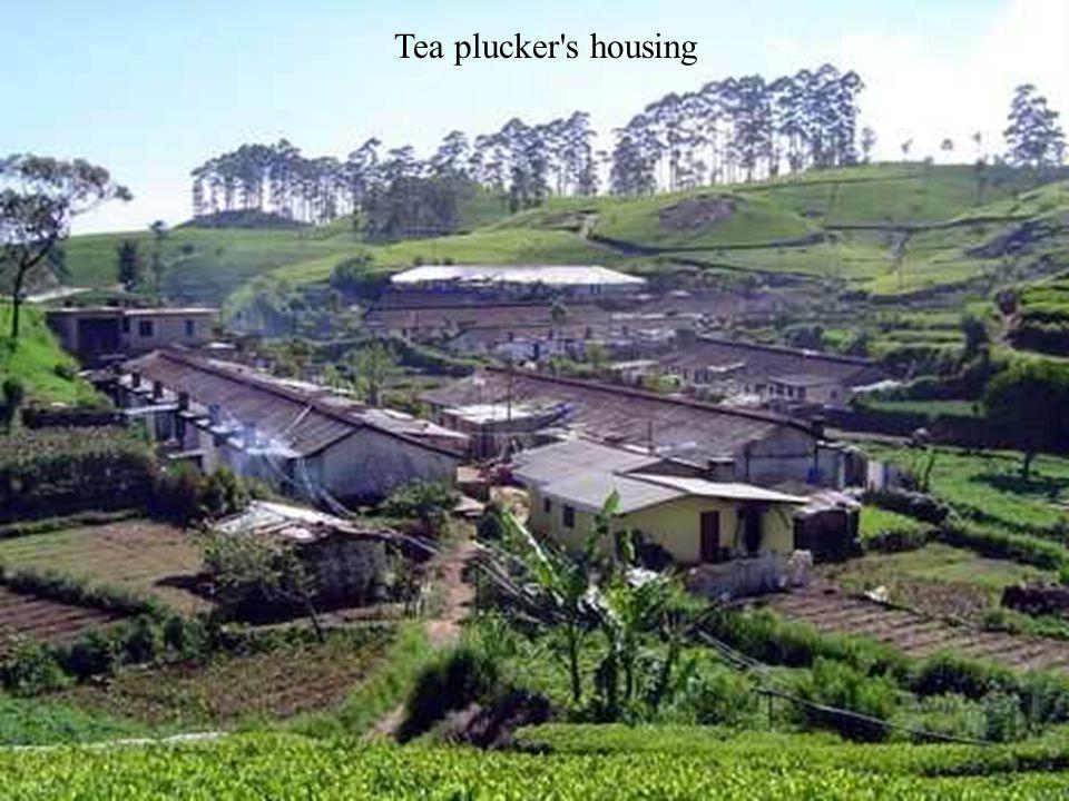 Tea plucker s housing