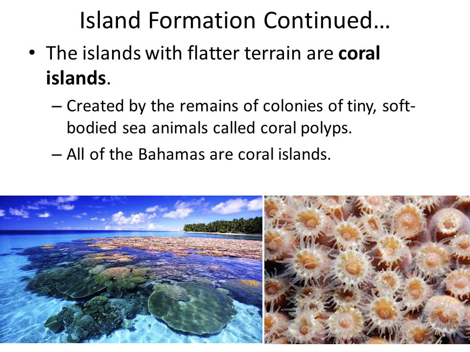 Island Formation Continued… The islands with flatter terrain are coral islands. – Created by the remains of colonies of tiny, soft- bodied sea animals