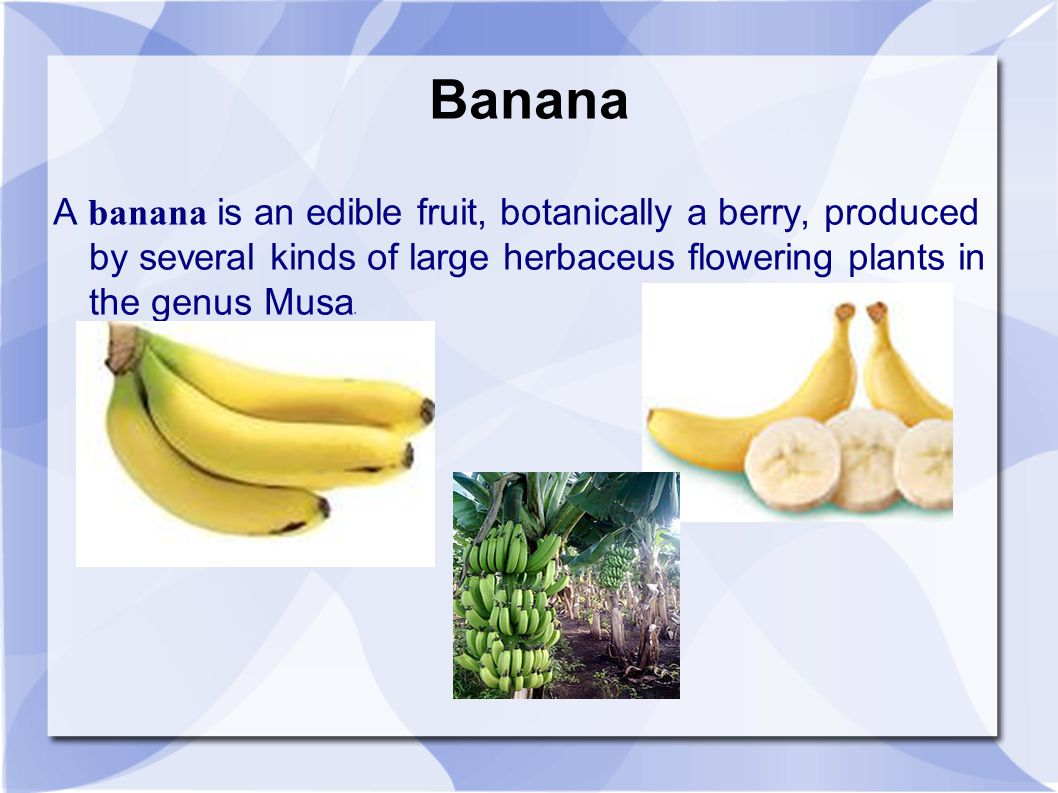 Banana A banana is an edible fruit, botanically a berry, produced by several kinds of large herbaceus flowering plants in the genus Musa.