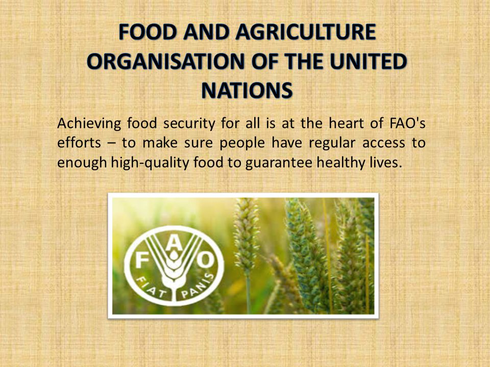 Achieving food security for all is at the heart of FAO s efforts – to make sure people have regular access to enough high-quality food to guarantee healthy lives.