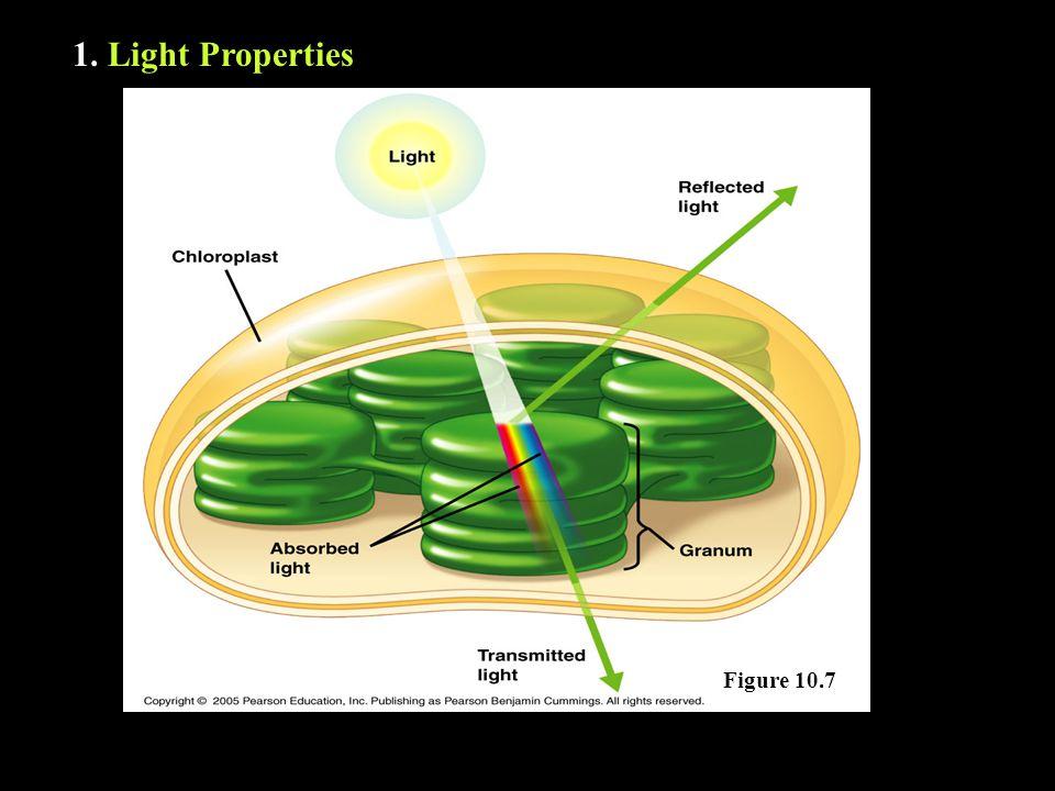 1. Light Properties Figure 10.7