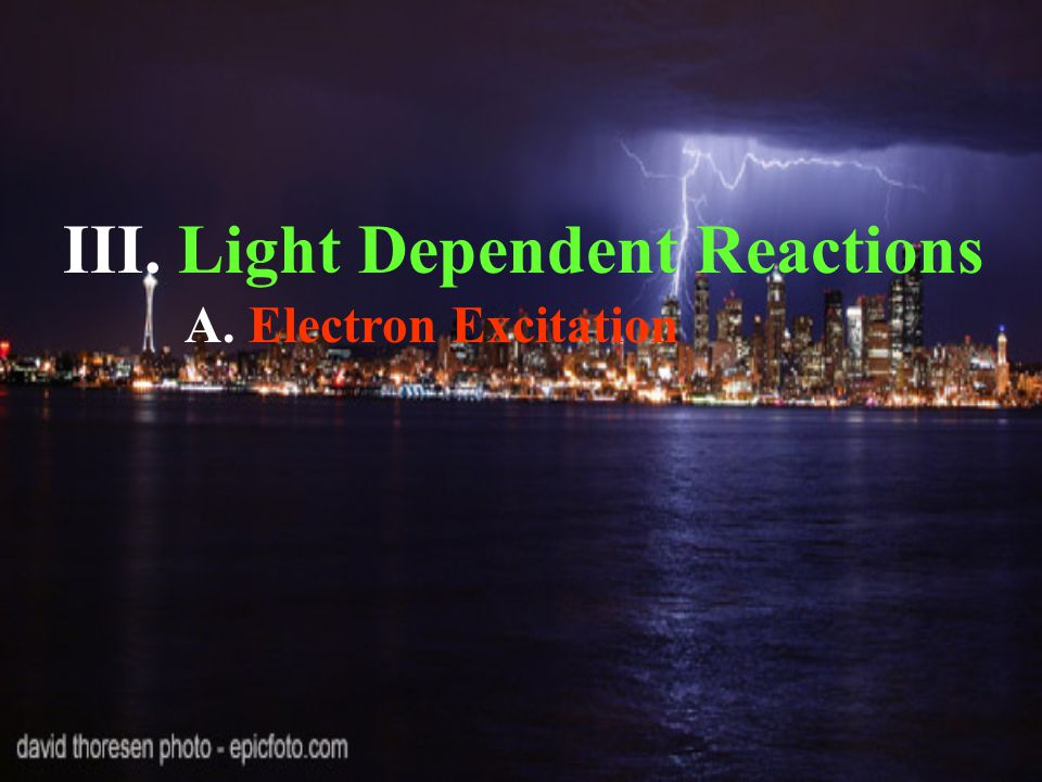 III. Light Dependent Reactions A. Electron Excitation
