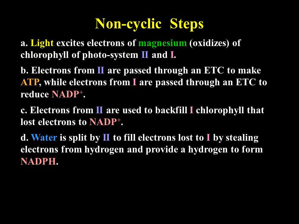 Non-cyclic Steps a.