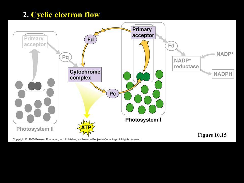 2. Cyclic electron flow Figure 10.15