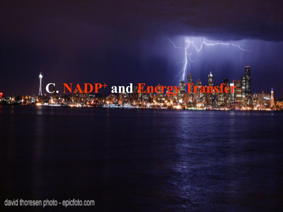 C. NADP + and Energy Transfer