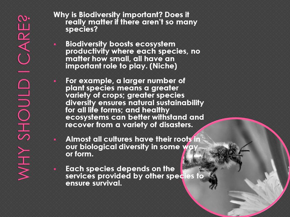 H OW DO INTERACTIONS BETWEEN ORGANISMS LEAD TO A STABLE ECOSYSTEM .