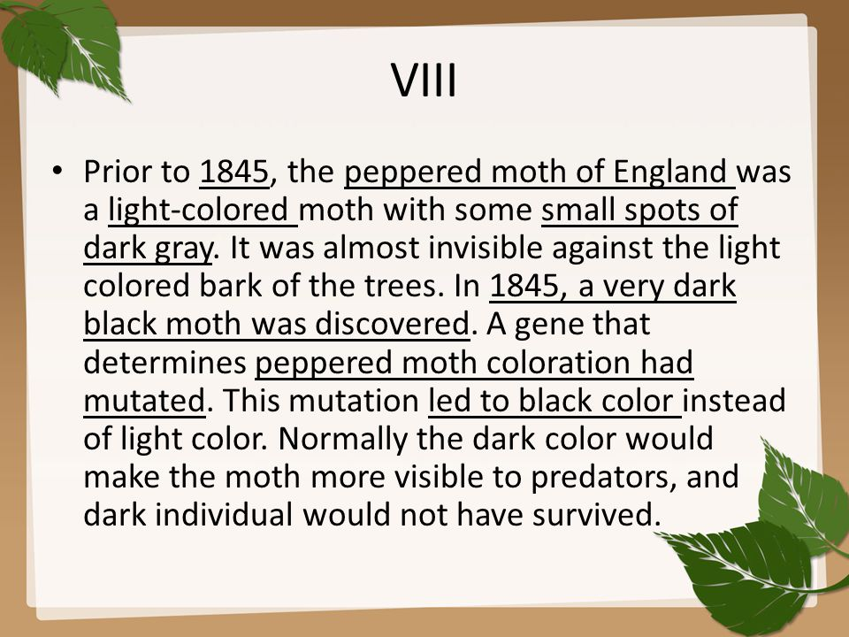 VIII Prior to 1845, the peppered moth of England was a light-colored moth with some small spots of dark gray.