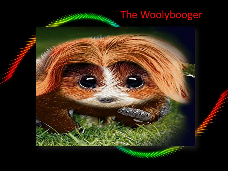 The Woolybooger