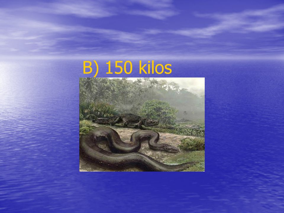 The Anaconda is the biggest snake in the world. It´s 8 metres long.