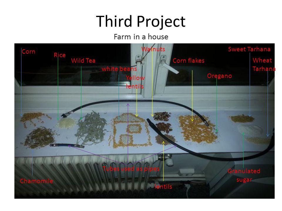 Third Project Farm in a house Corn Sweet TarhanaWalnuts Wheat Tarhana Corn flakes Oregano Granulated sugar Tubes used as pipes Chamomile Rice Wild Tea white beans lentils Yellow lentils