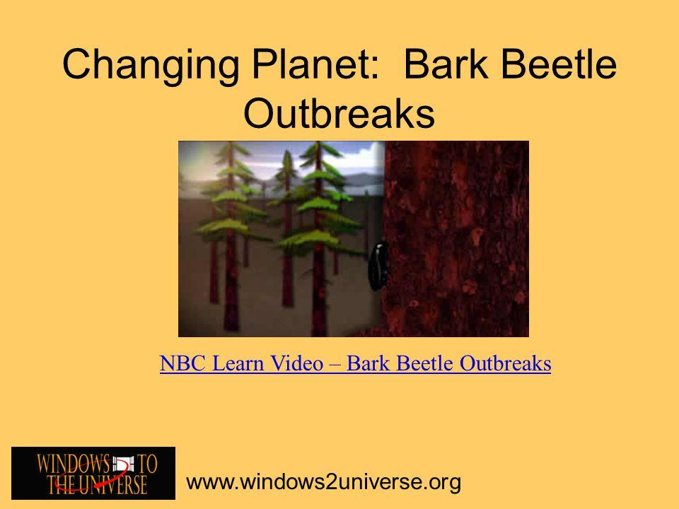 Changing Planet: Bark Beetle Outbreaks www.windows2universe.org NBC Learn Video – Bark Beetle Outbreaks