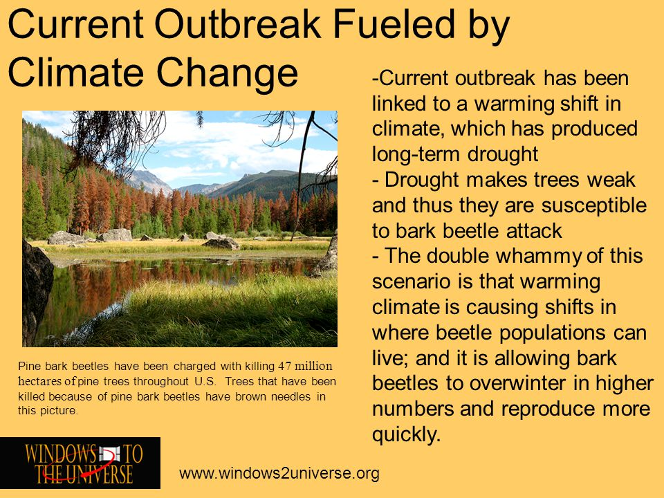 Current Outbreak Fueled by Climate Change www.windows2universe.org -Current outbreak has been linked to a warming shift in climate, which has produced