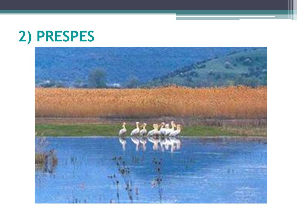 2) PRESPES