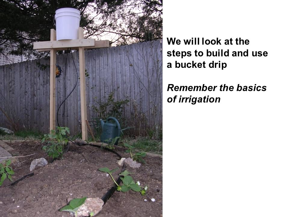 We will look at the steps to build and use a bucket drip Remember the basics of irrigation