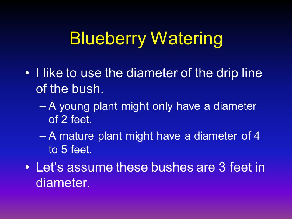 Blueberry Watering I like to use the diameter of the drip line of the bush.