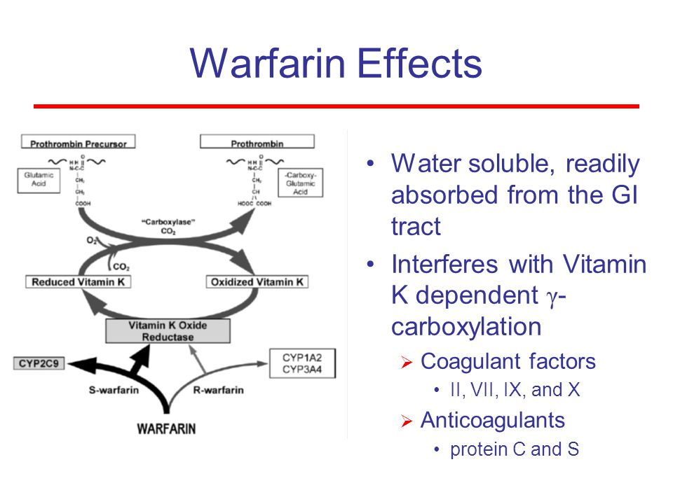 Warfarin Effects Water soluble, readily absorbed from the GI tract Interferes with Vitamin K dependent γ- carboxylation  Coagulant factors II, VII, I