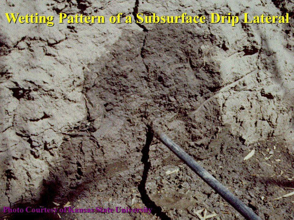 Wetting Pattern of a Subsurface Drip Lateral Photo Courtesy of Kansas State University