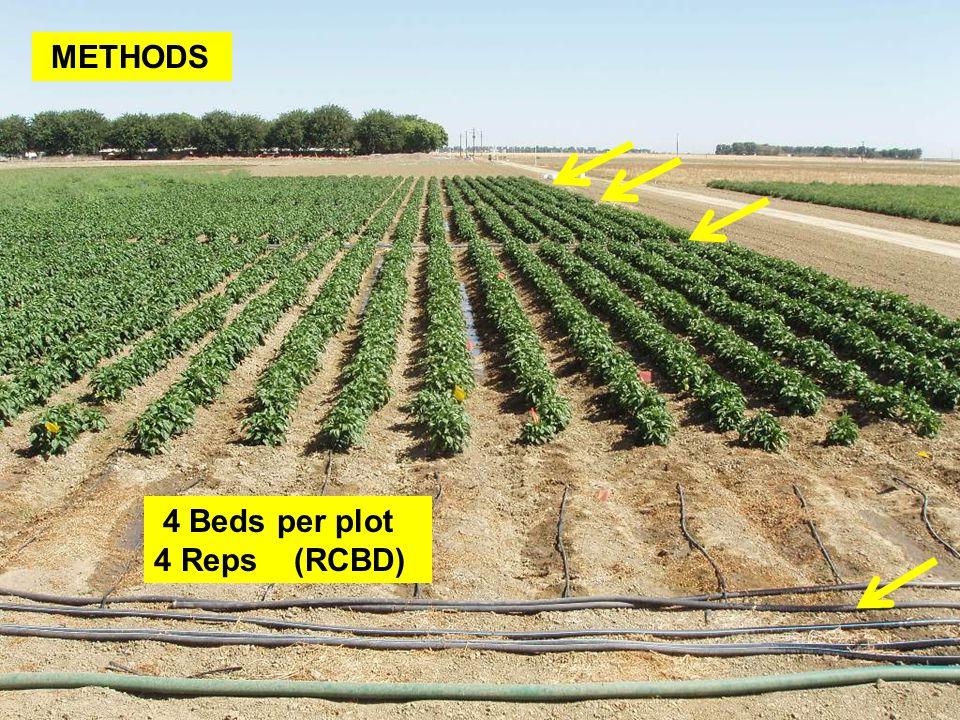 4 Beds per plot 4 Reps (RCBD)
