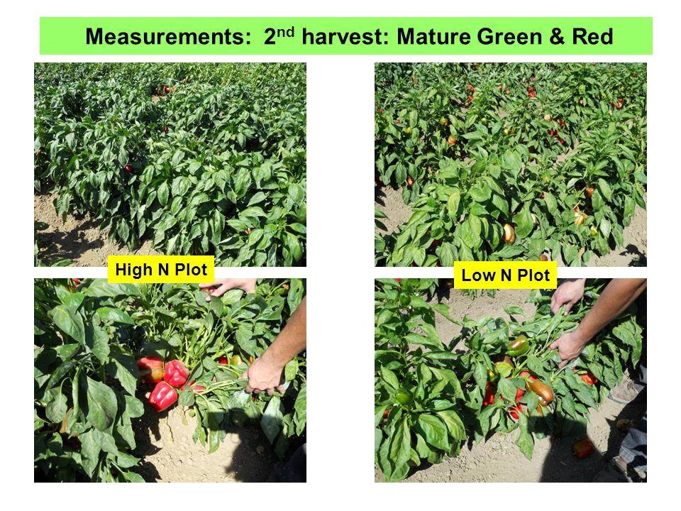 High N Plot Measurements: 2 nd harvest: Mature Green & Red Low N Plot