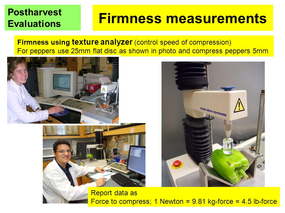 Firmness measurements Postharvest Evaluations Firmness using texture analyzer (control speed of compression) For peppers use 25mm flat disc as shown i