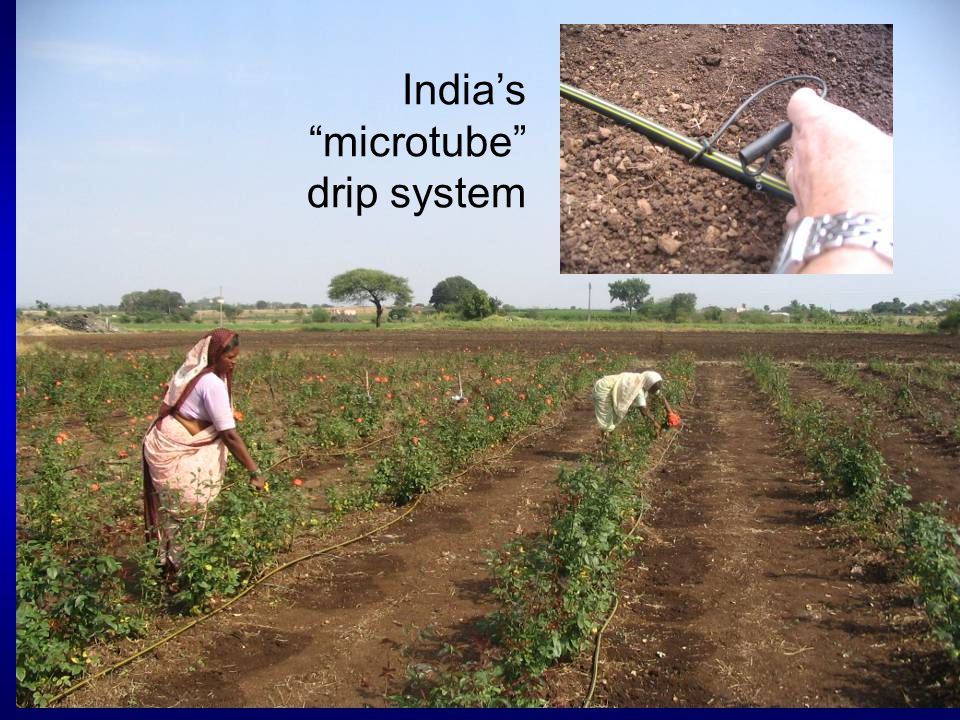 """India's """"microtube"""" drip system"""