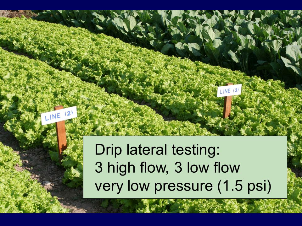 Drip lateral testing Drip lateral testing: 3 high flow, 3 low flow very low pressure (1.5 psi)