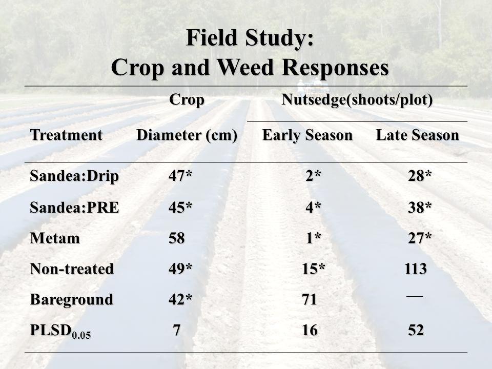 Field Study: Crop and Weed Responses CropNutsedge(shoots/plot)Treatment Diameter (cm) Early Season Late Season Sandea:Drip47* 2* 2* 28* 28* Sandea:PRE45* 4* 4* 38* 38* Metam58 1* 1* 27* 27* Non-treated49*15*113 Bareground42*71 ___ ___ PLSD 0.05 716 52 52