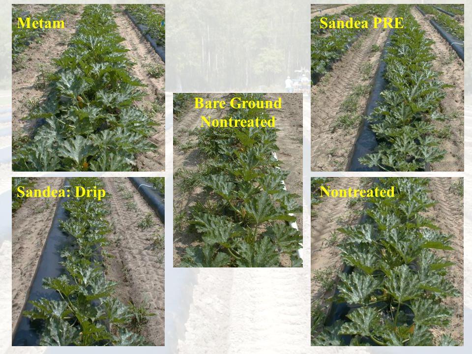 MetamSandea PRE Sandea: DripNontreated Bare Ground Nontreated