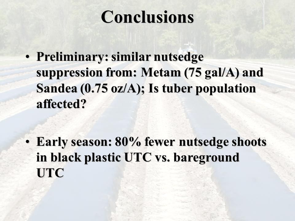 Conclusions Preliminary: similar nutsedge suppression from: Metam (75 gal/A) and Sandea (0.75 oz/A); Is tuber population affected Preliminary: similar nutsedge suppression from: Metam (75 gal/A) and Sandea (0.75 oz/A); Is tuber population affected.
