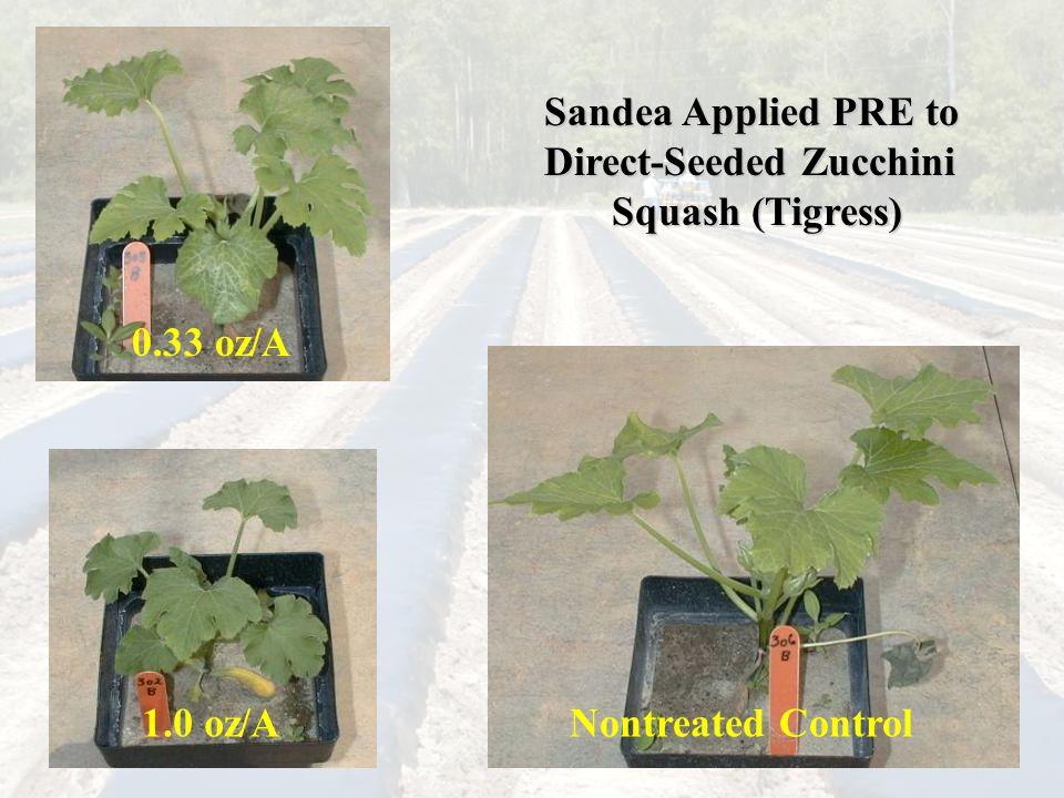 Sandea Applied PRE to Direct-Seeded Zucchini Squash (Tigress) 0.33 oz/A 1.0 oz/ANontreated Control