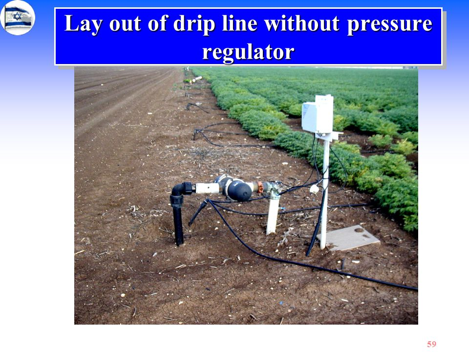 59 Lay out of drip line without pressure regulator