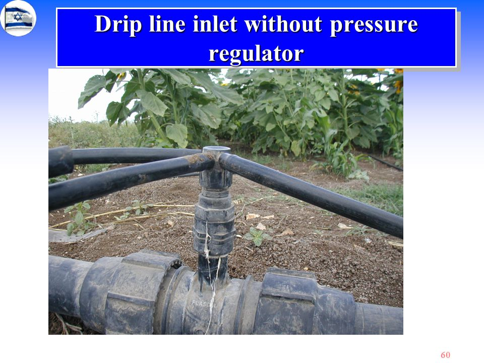 60 Drip line inlet without pressure regulator