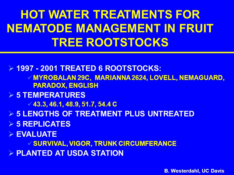   1997 - 2001 TREATED 6 ROOTSTOCKS: MYROBALAN 29C, MARIANNA 2624, LOVELL, NEMAGUARD, PARADOX, ENGLISH   5 TEMPERATURES 43.3, 46.1, 48.9, 51.7, 54.4 C   5 LENGTHS OF TREATMENT PLUS UNTREATED   5 REPLICATES   EVALUATE SURVIVAL, VIGOR, TRUNK CIRCUMFERANCE   PLANTED AT USDA STATION HOT WATER TREATMENTS FOR NEMATODE MANAGEMENT IN FRUIT TREE ROOTSTOCKS B.