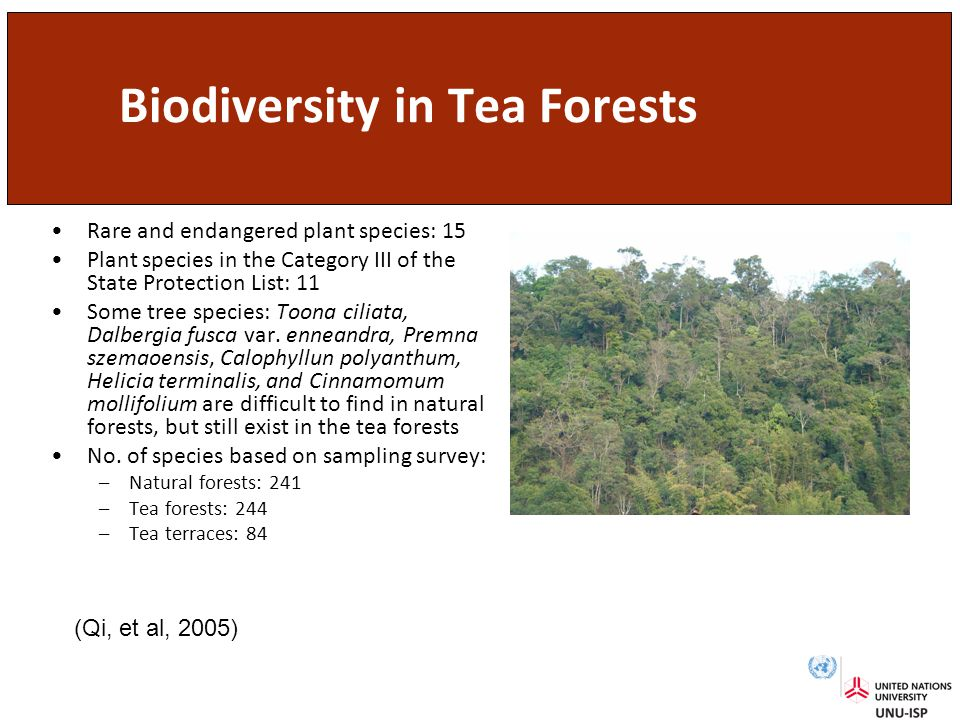 Biodiversity in Tea Forests Rare and endangered plant species: 15 Plant species in the Category III of the State Protection List: 11 Some tree species: Toona ciliata, Dalbergia fusca var.