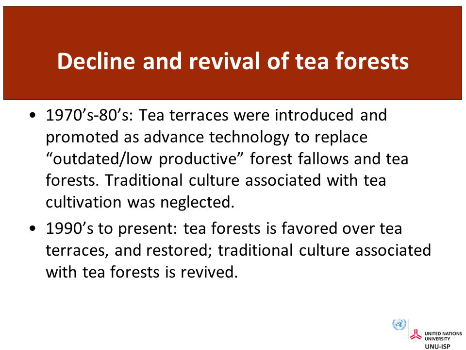 Decline and revival of tea forests 1970's-80's: Tea terraces were introduced and promoted as advance technology to replace outdated/low productive forest fallows and tea forests.