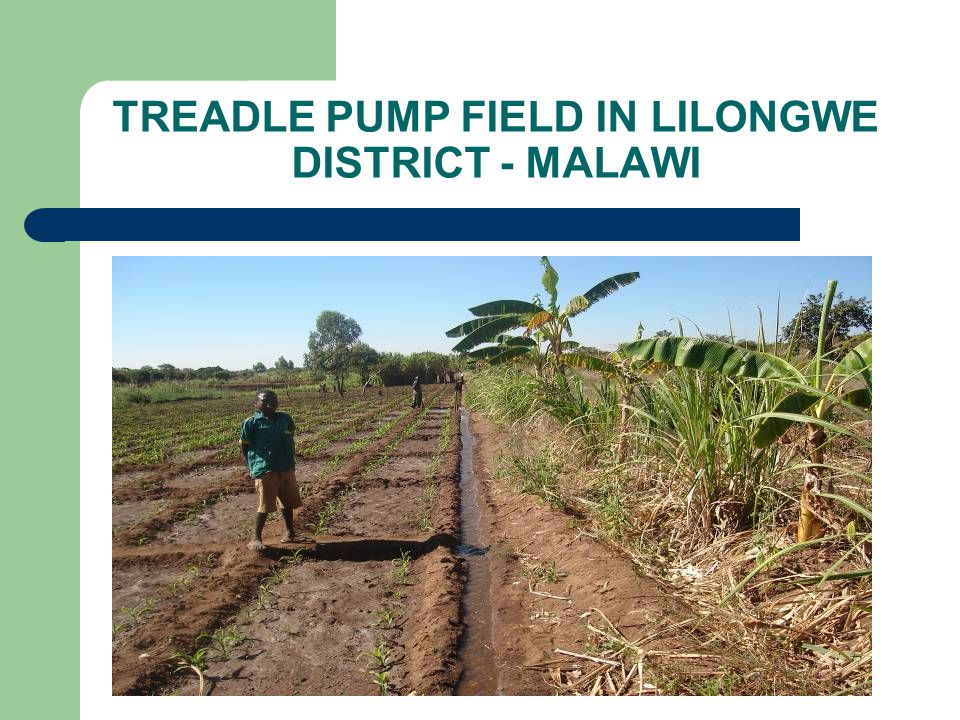 TREADLE PUMP FIELD IN LILONGWE DISTRICT - MALAWI