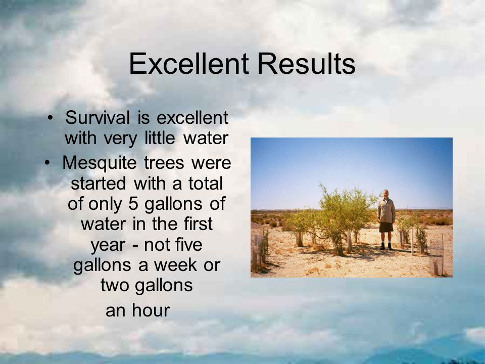 Excellent Results Survival is excellent with very little water Mesquite trees were started with a total of only 5 gallons of water in the first year - not five gallons a week or two gallons an hour