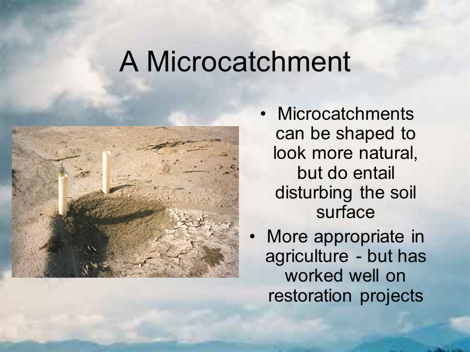 A Microcatchment Microcatchments can be shaped to look more natural, but do entail disturbing the soil surface More appropriate in agriculture - but has worked well on restoration projects