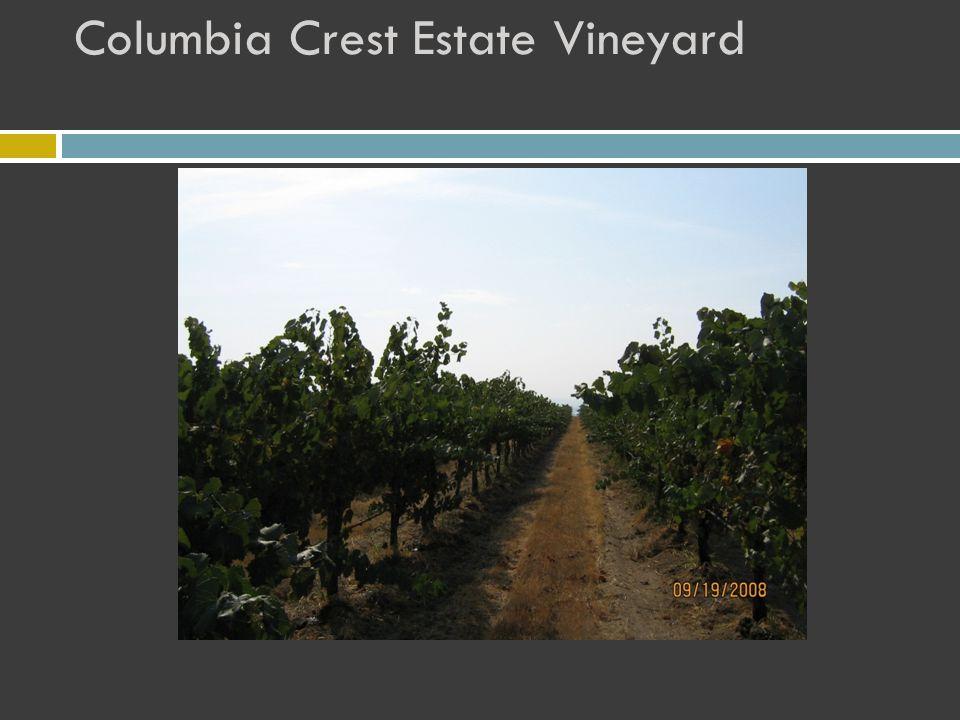 Columbia Crest Estate Vineyard