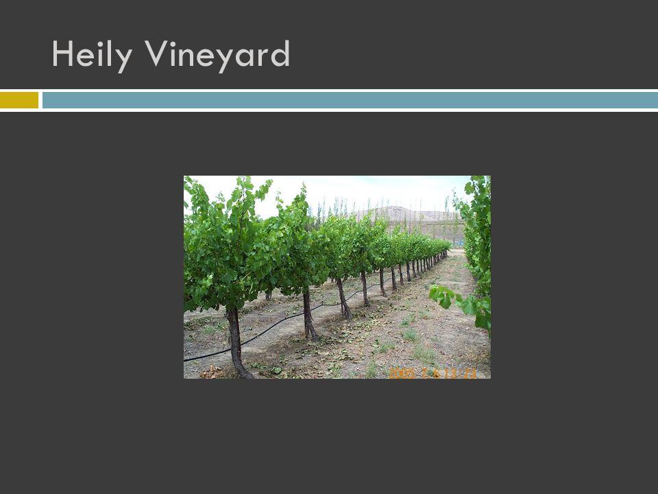 Heily Vineyard