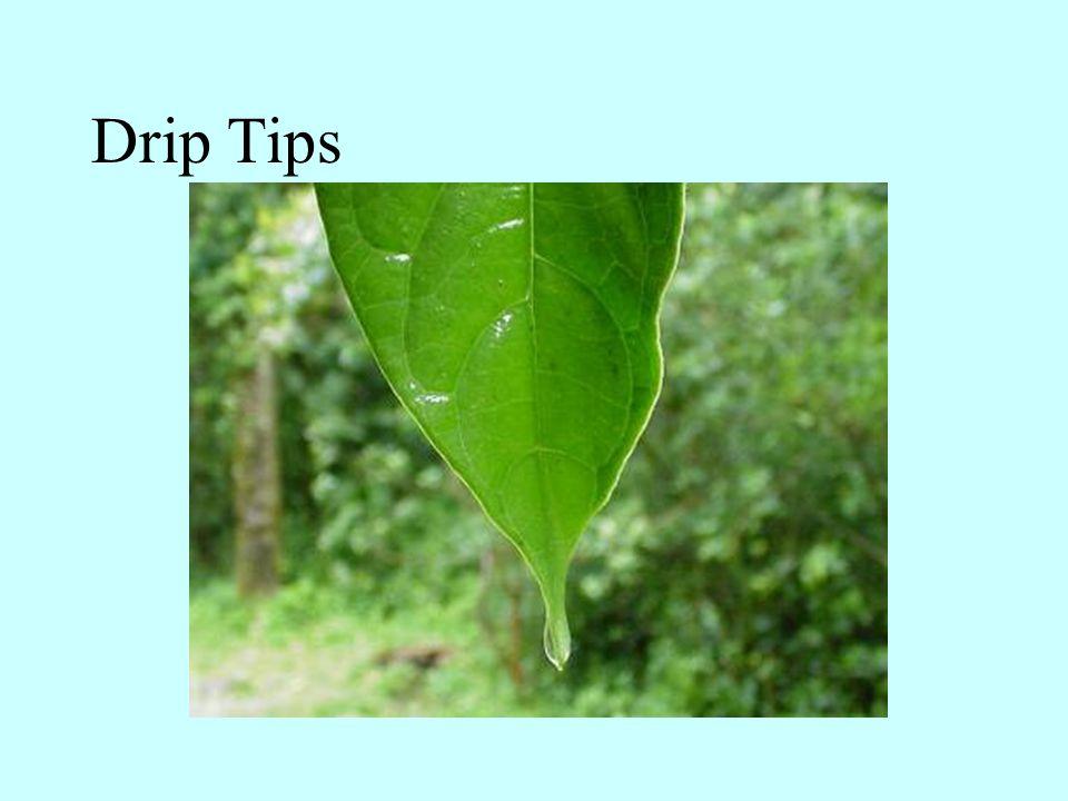 Drip Tips